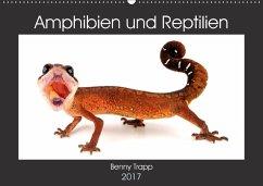 9783665561246 - Trapp, Benny: Amphibien und Reptilien (Wandkalender 2017 DIN A2 quer) - Buch