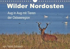 9783665560058 - Schaack, René: Wilder Nordosten - Aug in Aug mit Tieren der Ostseeregion (Wandkalender 2017 DIN A4 quer) - Buch