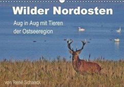 9783665560065 - Schaack, René: Wilder Nordosten - Aug in Aug mit Tieren der Ostseeregion (Wandkalender 2017 DIN A3 quer) - کتاب