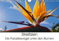 9783665560355 - Schröder, Silvia: Strelitzien - die Paradiesvögel unter den Blumen (Wandkalender 2017 DIN A4 quer) - Buch