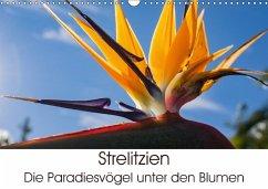 9783665560362 - Schröder, Silvia: Strelitzien - die Paradiesvögel unter den Blumen (Wandkalender 2017 DIN A3 quer) - Buch