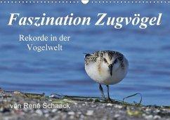 9783665561390 - Schaack, René: Faszination Zugvögel - Rekorde in der Vogelwelt (Wandkalender 2017 DIN A3 quer) - کتاب