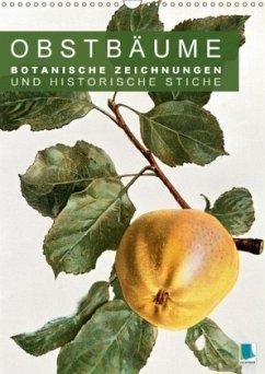 9783665561840 - CALVENDO: Obstbäume: Botanische Zeichnungen und historische Stiche (Wandkalender 2017 DIN A3 hoch) - Buch