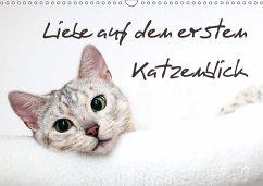 9783665562915 - Enderlein - Bethari Bengals, Sylke: Liebe auf den ersten Katzenblick (Wandkalender 2017 DIN A3 quer) - کتاب