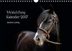 9783665563080 - Ludwig, Sandra: Welsh Pony Kalender 2017 (Wandkalender 2017 DIN A4 quer) - Libro