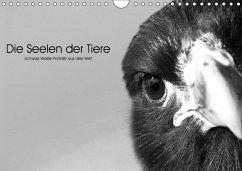 9783665563288 - Skrypzak, Rolf: Die Seelen der wilden Tiere (Wandkalender 2017 DIN A4 quer) - کتاب
