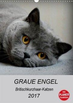 9783665565305 - Brumma, Jacqueline: Graue Engel - Britischkurzhaar-Katzen (Wandkalender 2017 DIN A3 hoch) - Buch