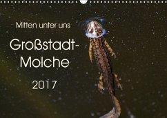 9783665566364 - Wibke Hildebrandt, Anne: Mitten unter uns - Großstadt-Molche (Wandkalender 2017 DIN A3 quer) - Buch