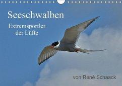 9783665567354 - Schaack, René: Seeschwalben - Extremsportler der Lüfte (Wandkalender 2017 DIN A4 quer) - Buch