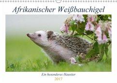 9783665567439 - Zimmermann, Andreas; Zimmermann, Marina: Afrikanische Weißbauchigel (Wandkalender 2017 DIN A3 quer) - کتاب