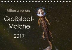 9783665566388 - Wibke Hildebrandt, Anne: Mitten unter uns - Großstadt-Molche (Tischkalender 2017 DIN A5 quer) - کتاب