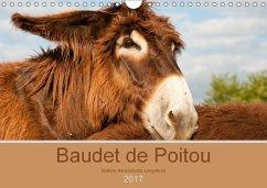 9783665568801 - Bölts, Meike: Baudet de Poitou - Seltene französische Langohren (Wandkalender 2017 DIN A4 quer) - Buch