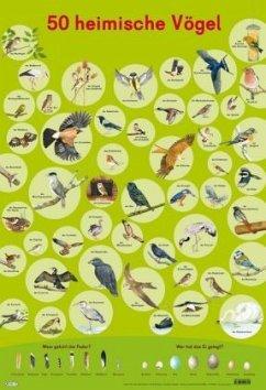 Mein Lernposter: 50 Heimische Vögel