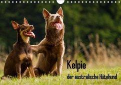 9783665582098 - Brickum, Cornelia: Kelpie - der australische Hütehund (Wandkalender 2017 DIN A4 quer) - Livre