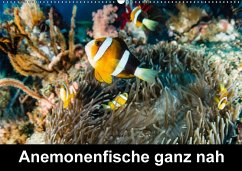 9783665583354 - Tschierschky, Michael: Anemonenfische ganz nah (Wandkalender 2017 DIN A2 quer) - Buch