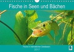 9783665583781 - CALVENDO: Fische in Seen und Bächen (Wandkalender 2017 DIN A4 quer) - Buch
