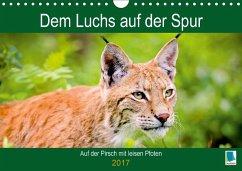 9783665583743 - CALVENDO: Dem Luchs auf der Spur (Wandkalender 2017 DIN A4 quer) - Buch