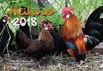 Hühner 2018