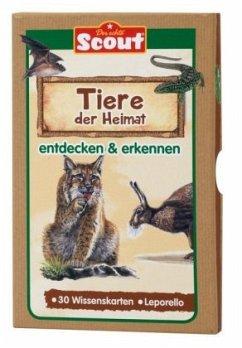 Scout Lernkarten-Box - Tiere der Heimat