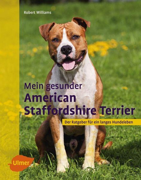 Z Force American Staffordshire Terrier Mein gesunder American...