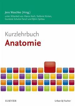 Kurzlehrbuch Anatomie - Koch, Marco; Kürten, Stefanie; Schulze-Tanzil, Gundula; Spittau, Björn