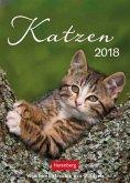 Katzen 2018