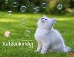 Katzenkinder Posterkalender 2018