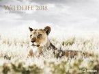 Wildlife 2018 Posterkalender