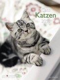 Katzen 2018 Posterkalender