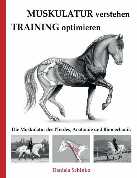 Muskulatur verstehen - Training optimieren von Daniela Schinko ...