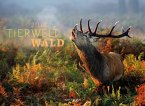 Tierwelt Wald 2018