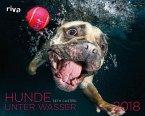 Hunde unter Wasser 2018