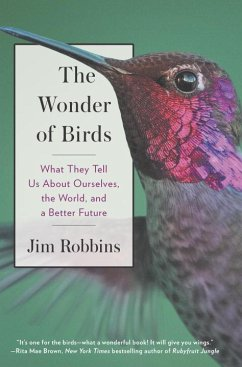 Wonder Of Birds