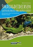 Smaragdeidechsen Lacerta bilineata und Lacerta viridis