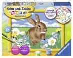 Ravensburger 280643 - Süßes Kaninchen - Malen nach Zahlen, MNZ