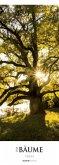 Bäume 2018 Streifenkalender XXL
