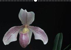 Frauenschuhe - die schönsten Orchideen der Welt...