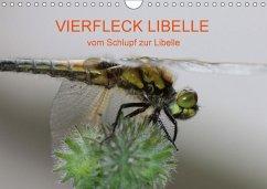 VIERFLECK LIBELLE - vom Schlupf zur Libelle (Wandkalender 2018 DIN A4 quer)