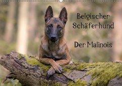 Belgischer Schäferhund - Der Malinois (Wandkalender 2018 DIN A2 quer)