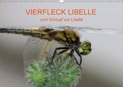 VIERFLECK LIBELLE - vom Schlupf zur Libelle (Wandkalender 2018 DIN A3 quer)