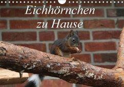 Eichhörnchen zu Hause (Wandkalender 2018 DIN A4 quer)