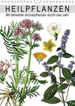 Heilpflanzen (Wandkalender 2018 DIN A4 hoch) Di...