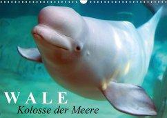 Wale - Kolosse der Meere (Wandkalender 2018 DIN A3 quer)