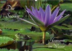 Die Seerose - Harmonie im Wasser (Wandkalender 2018 DIN A2 quer)