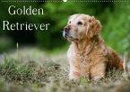 Golden Retriever (Wandkalender 2018 DIN A2 quer)
