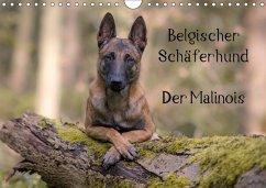 Belgischer Schäferhund - Der Malinois (Wandkalender 2018 DIN A4 quer)