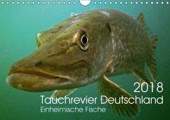Tauchrevier Deutschland (Wandkalender 2018 DIN A4 quer) Dieser erfolgreiche Kalender wurde dieses Jahr mit gleichen Bildern und aktualisiertem Kalendarium wiederveröffentlicht.