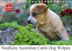 Niedliche Australian Cattle Dog Welpen (Tischkalender 2018 DIN A5 quer)