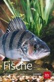 Fische (Mängelexemplar)
