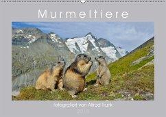 MurmeltiereAT-Version (Wandkalender 2018 DIN A2 quer) Dieser erfolgreiche Kalender wurde dieses Jahr mit gleichen Bildern und aktualisiertem Kalendarium wiederveröffentlicht.